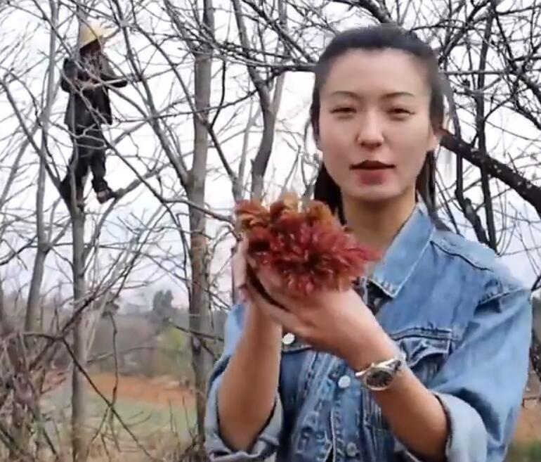 云南农户靠卖香椿3个月赚18万,香椿最贵卖到200元一公斤